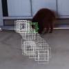 【AviUtl】モーショントラッキングを使って顔を隠す方法【追跡機能】