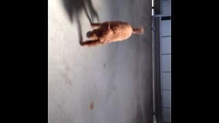 【AviUtl】動画を縦横に回転させる方法