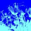 【AviUtl】ティム氏のスクリプトまとめ(7/9)【フォトショ風なフィルターセット(カラグレ)】