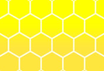 ハチの巣1